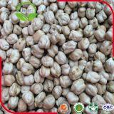 2016 feijões crus do grão-de-bico dos grãos-de-bico