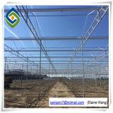 China-Fabrik-Glasgrünes Wasserkulturhaus für Tomate