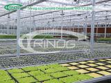 Estufa de vidro na única camada para o Seeding