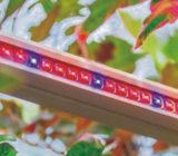 Gewächshaus LED der Hydroponik-450W wachsen Licht