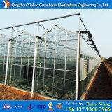 Galvanisiertes Muti-Überspannung Glasgewächshaus für Tomate