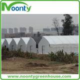 광고 방송을%s 수직 풍동 녹색 집