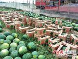 Natürliches spraygetrocknetes Wassermelone-Fruchtsaft-Puder