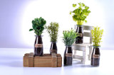 Varias hierbas artificiales en el florero de cristal para la decoración pública
