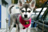 Pet All Season Pet Harness O Comfort & Control Original Dog Harness 4-40 Lbs; Sem Pull & No Choke Design, Luxor acolchoado acolchoado, ecológico,
