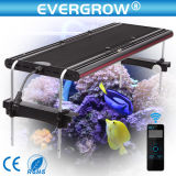 산호 Reef Fish Tank Used 200W LED Aquarium Light
