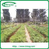 Serre chaude nette agricole avec la couverture de réseau d'insecte
