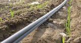 平らな滴り潅漑の管ライン
