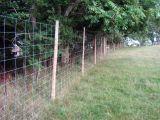 Frontière de sécurité d'inducteur/frontière de sécurité ferme de bétail/frontière de sécurité de prairie