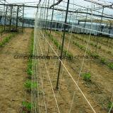 上昇のプラントサポート網か緑の庭の網