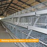 케냐 닭 농장 최신 판매 유형 층 가금 건전지 감금소