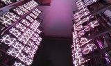Visualización de LED a todo color del alquiler P6 de los acontecimientos de la etapa del emparejamiento de la hospitalidad