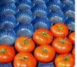 Tellersegmente frisches Obst und Gemüse des freies Beispielpp. verpackentellersegment-Wegwerfplastiktellersegmente