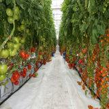 최신 판매 야채 꽃 과일을%s 상업적인 수경법 시스템 온실