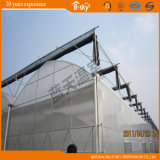 Polycarbonat Sheet Green House mit Film Roof China Supplier