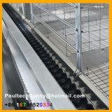 Cages automatiques de couche de batterie de rangées du bâti 4 de H de Poul-Technologie