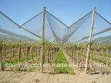 Сеть окликом HDPE предохранения от фруктовых дерев дерев сада UV обработанная анти-