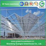 Multi-Überspannung Stahlrahmen-Aluminiumprofil-Polycarbonat-Blatt-Gewächshaus