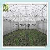 Multispan Agra Tunnel-Tomate-grünes Haus