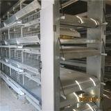 Gaiola automática da camada da eficiência elevada da produção 2016 (ISO9001)