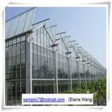 Serra di vetro del sistema idroponico per il pomodoro
