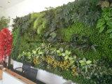 Form-künstliche Gartenarbeit-Pflanzen für grüne Wandverkleidungs-Dekoration