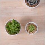 Grande mini Flowerpot pequeno cerâmico redondo