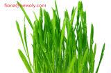 Het organische Poeder van het Sap van het Gras van de Tarwe--Newoly