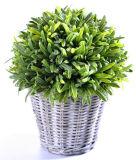 Clases de plantas vivas artificiales en la cesta de la rota para la decoración al aire libre de /Indoor