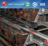 Equipo de granja automático de los pájaros usado para la casa de pollo a medias incluida (A-4L120)