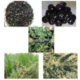 Controllo di peso della nespola Goji nero secco Wolfberry