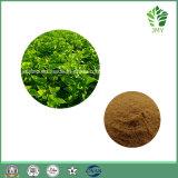 Natual Reinheit-Haut-Maulbeere-Blatt-Auszug, 1-Deoxynojirimycin 1% bis 30%