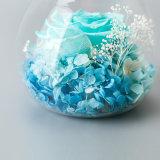 Flores preservadas luminosas para la decoración casera de la Navidad
