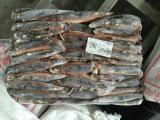Sotto 100g mare congelato del calamaro di Illex calamaro congelato