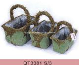 Plantador verde del jardín de la hierba del musgo