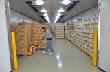 Bitzerの凝縮の単位が付いている低温貯蔵部屋のスリラーを熟させているバナナ