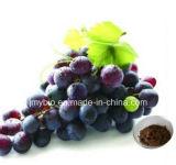 Qualität 5% Resveratrol, 25% Polyphenol-Trauben-Haut-Auszug