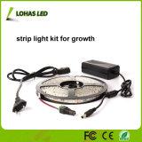 4: 1 빨강과 파란 색깔 IP 방수 LED는 플랜트를 위한 지구 빛 장비를 증가한다