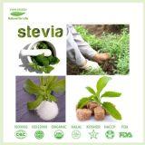 100% natürlicher Stofforganischer Stevia mit Massengroßhandelspreis