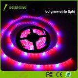 4: 1 o diodo emissor de luz impermeável do IP da cor vermelha e azul cresce o jogo da luz de tira para plantas
