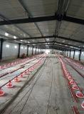 Strumentazione automatica del bestiame con la Camera della struttura d'acciaio per i progetti di chiave in mano con installazione