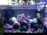 Aquarium noir ou argenté DEL de soldat de marine de l'aluminium 72W 40cm