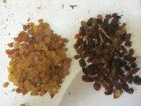 De nieuwste In de zon gedroogde Rozijnen kleuren Sorteerder voor het Sorteren van Rozijnen