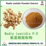 Het natuurlijke Uittreksel van de Wortel van Isatidis van de Wortel Indigowoad/voor Anti-Viral Ingrediënt Tcm