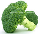 Extrait 1% 98% Sulforaphane de broccoli