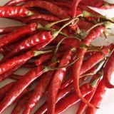 Peperoncini rossi del Yunnan Aborl senza gambo
