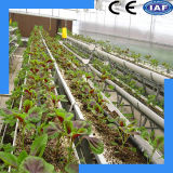 Greenhouse Hydroponic System for Vegetable and Flower Cultivation