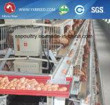 ein Rahmen-Geflügel überlagern Huhn-Rahmen
