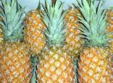 Bromelina natural da enzima do extrato do abacaxi para o aditivo de alimento
