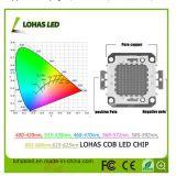 La puce de l'ÉPI DEL de large spectre de l'ÉPI 10W-300W de DEL pour la DEL élèvent la lumière